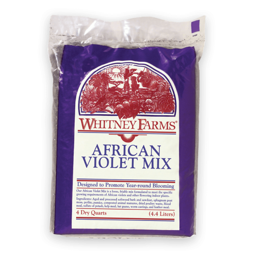 WHITNEY-FARMS_african-violet-mix