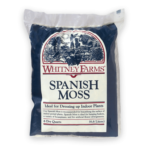 WHITNEY-FARMS_spanish-moss
